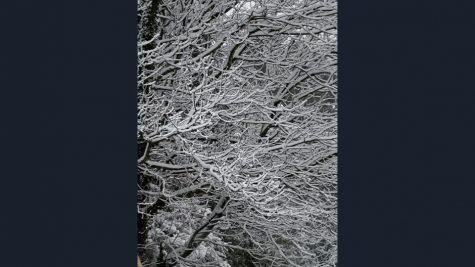 A Snowy Photo Essay
